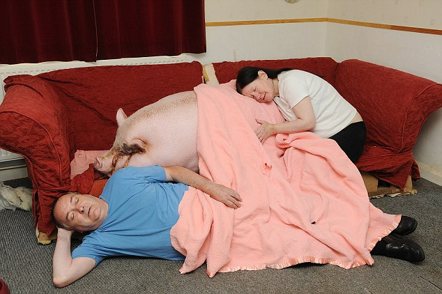 Bacon sandwich: Babe's owner's Colin and Susie Webb are slowly being muscled out of their own home by the giant porker
