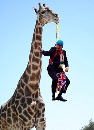 Hanging on the wild side: Mr Johnson dangles from the mouth of a giraffe, and right, finds himself in a baby bouncer