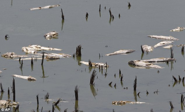 Iowa officials said $10 million worth of sturgeon turned up  dead in the Des Moines River, a value partly based on their coveted eggs, which are used for caviar.