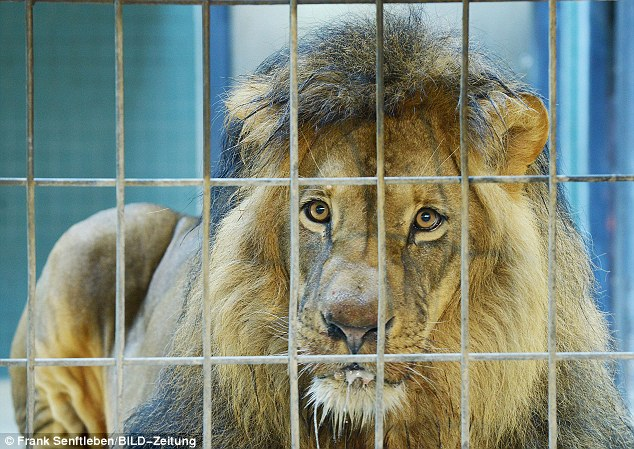 'Poisoned': The beautiful creatures began foaming at the mouth after being fed something that was not part of their zoo diet, keepers believe