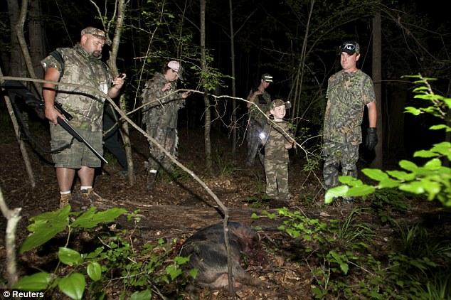 Gotcha: Hunters find a 60 pound a hog shot by Jason Weaver