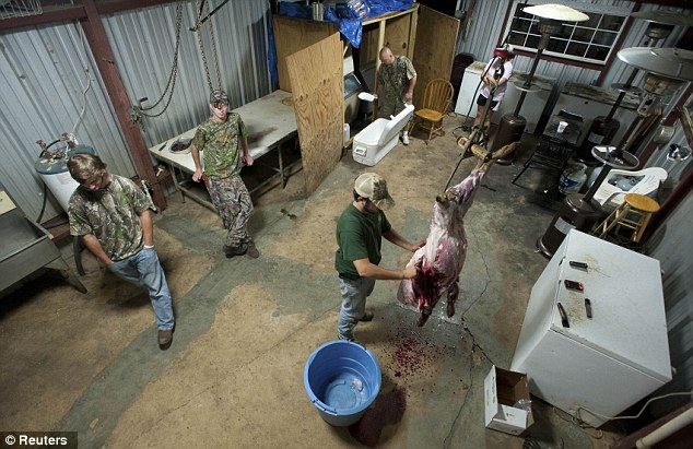 Gutted: Hunter Pritchett, pictured right, dresses a 60 pound hog before cooking