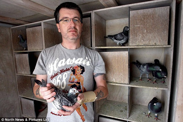Pigeon fancier Stuart Fawcett said the huge bird disappearances this summer have made it the wrost year of racing in memory