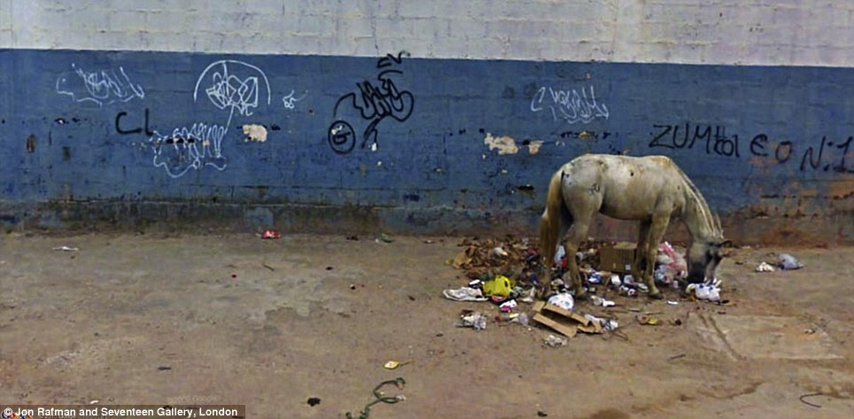 What would you rather see eating your garbage, a rat or a horse?