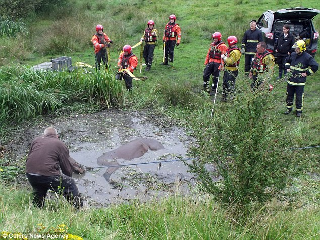 Suffering: The horse was struggling to keep his head above water when the rescuers arrived