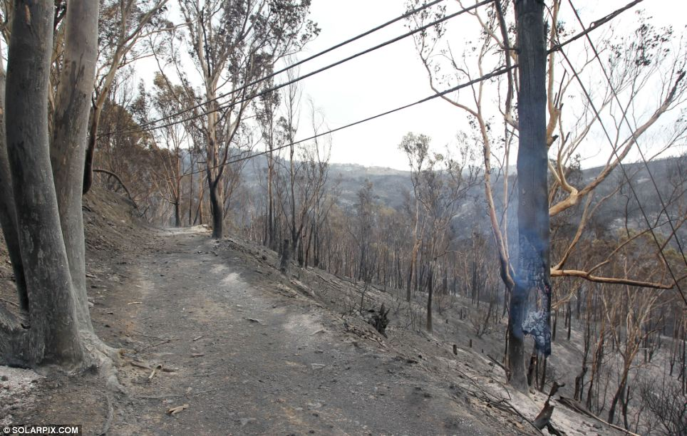 Damage: Hundreds of acres have already been left destroyed by the blaze