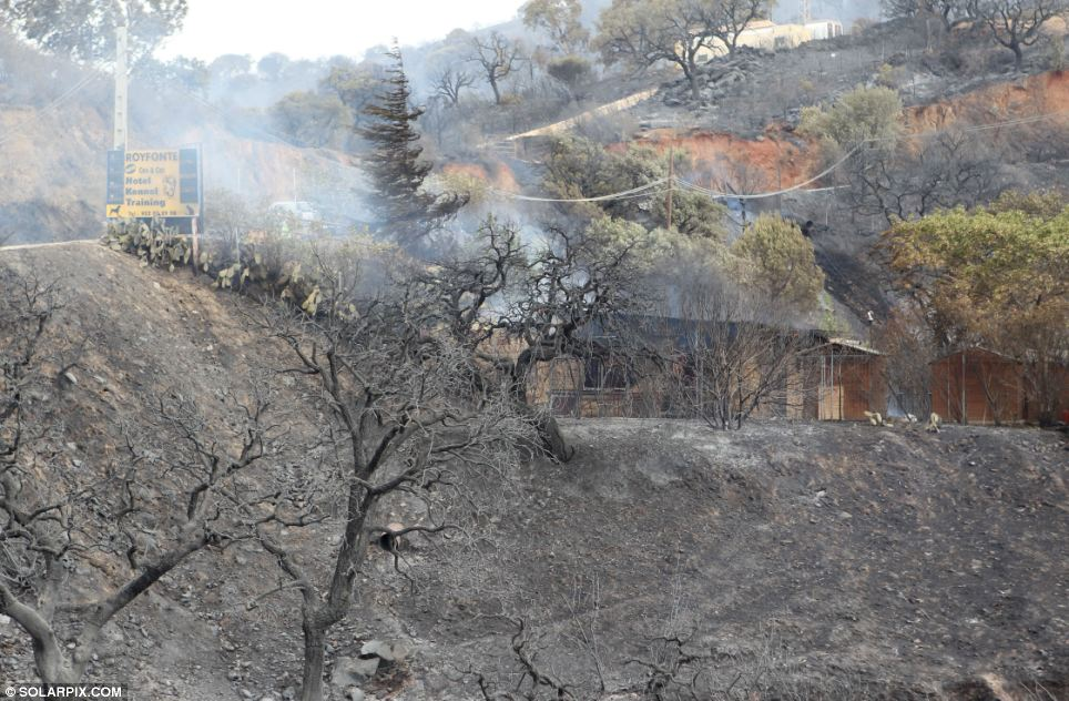 Horrifying: A house is surrounded by charred trees and smoke after being surrounded by the fire