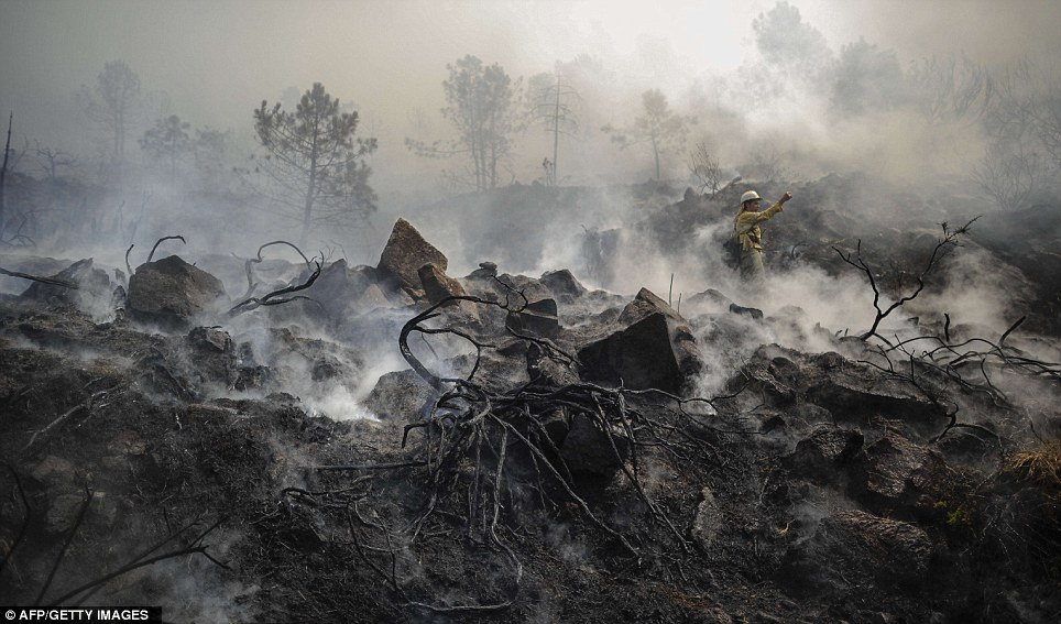 Destruction: A firefighter of the specialist wildfires emergency brigade stands amidst smouldering terrain in Ojen near Malaga