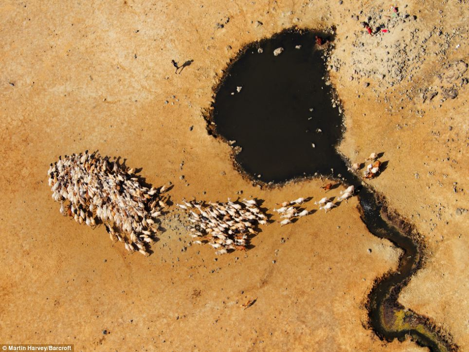 Africa from above: A herd of goats gather at the Koroli springs in northern Kenya's Chalbi desert