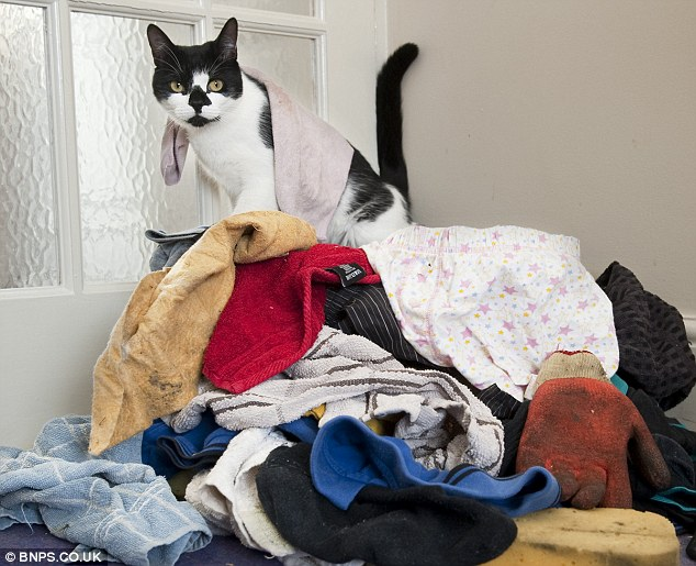 Cheeky cat Denis, now known as Denis the Menace to his neighbours, with his haul of stolen goods