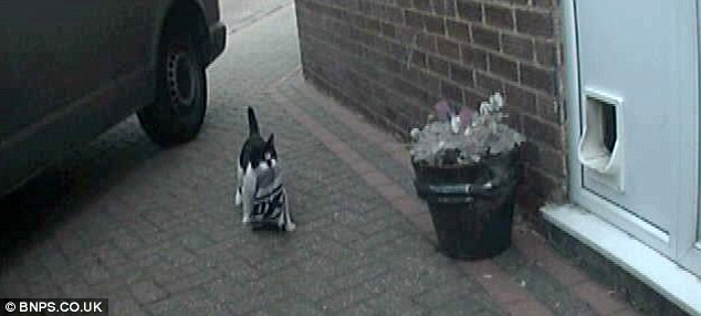 CCTV footage captures Denis carrying a bike helmet bag in his mouth on to the family's driveway