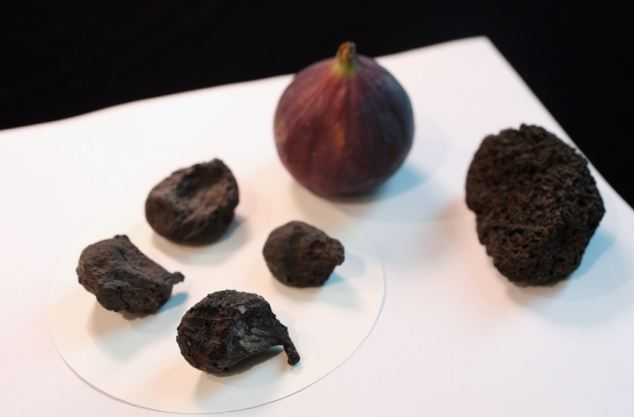 Preserved carbonised figs from the site of the destroyed Roman seaside town of Herculaneum on display at the British Museum at an event to launch the 'Life and Death in Pompeii and Herculaneum' exhibition.