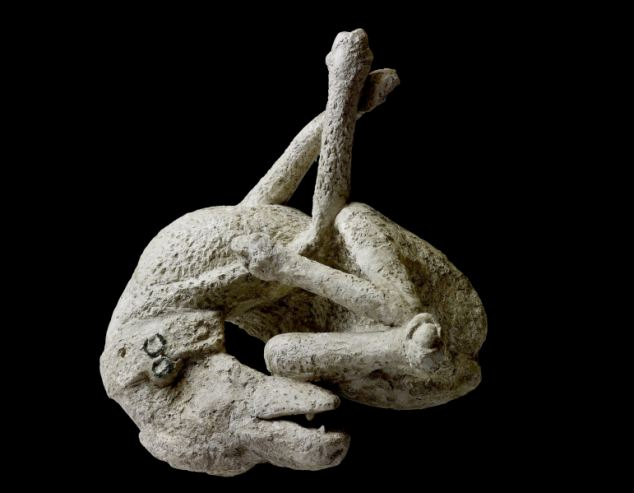 A a plaster cast of a dog, from the House of Orpheus, Pompeii, AD 79 that will go on show