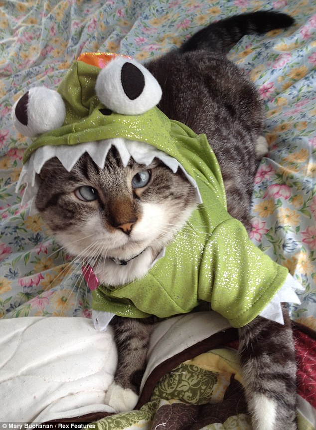 Cross-eyed Kermit: Spangles sports a frog outfit and shows why he has become such a hit