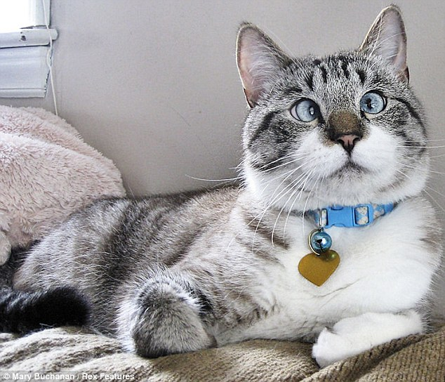 The pretty puss, who can see out of both eyes, has won 5,000 followers
