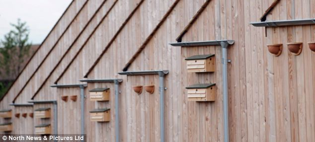The timber homes include built in bird boxes and even a 'bug hotel'