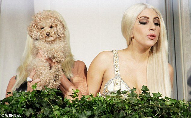 Peekaboo! The pair were joined on the balcony of the Palazzo Versace by Gaga's dog Fonzi Bear