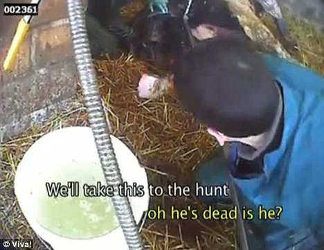 Used for food: Workers discuss how to dispose of the dead animals