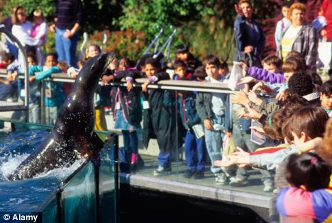 (File picture) The Born Free Foundation, which commissioned the Bristol University research, said it was 'greatly disappointed' to find so many zoos failing to meet standards