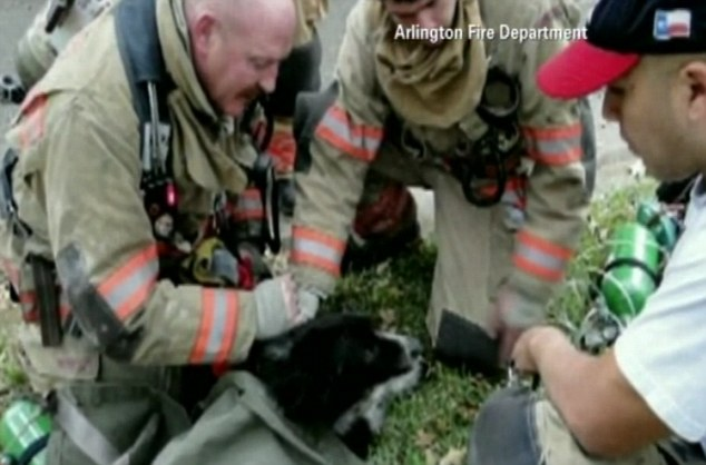 Last moments: Unfortunately, even the fire service's special oxygen masks for pets could not save the life of the poor animal
