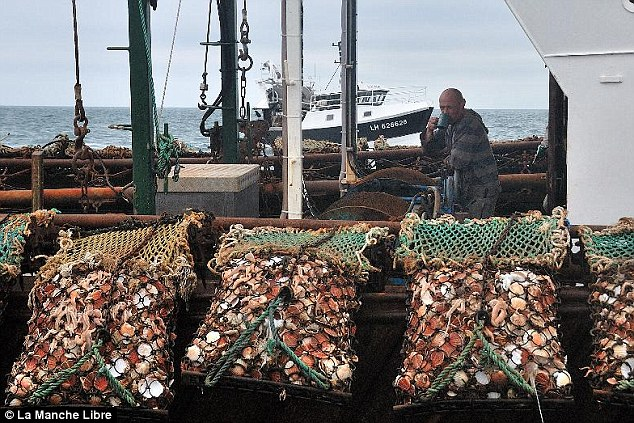Tension: French trawlers have confronted the British following a dispute over fishing for scallops. This image shows a British trawler with catch of scallops
