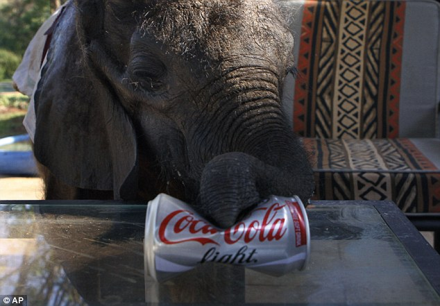 Thirsty: Despite being brought up by humans, Moses was expected to be able to be released back into the wild