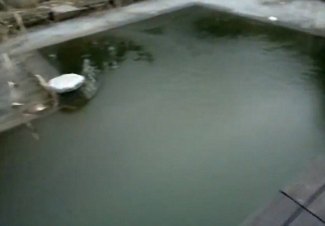Chilly: The swimming pool - believed to be at a house in Germany - was covered with ice