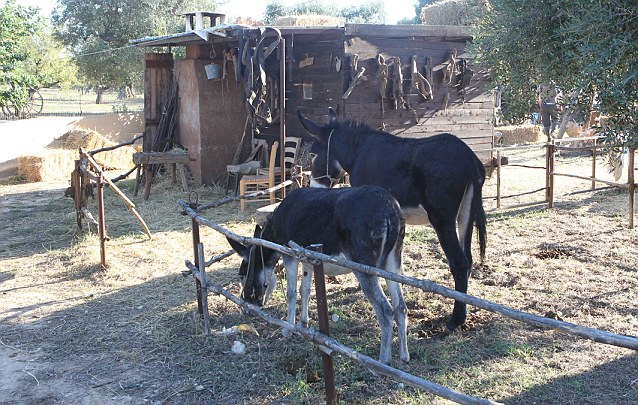 Into the wild: The extensive grounds appear to feature horses, a ramshackle stable and log fences