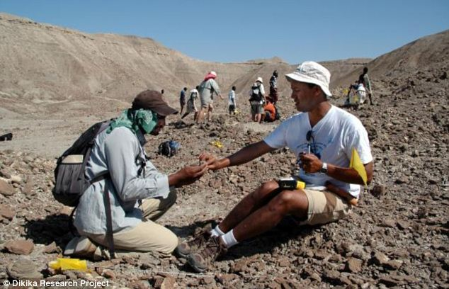 Field work: Dr Zeray Alemseged (right) working in the field in Dikika, Ethiopia, where Selam's skeleton was uncovered