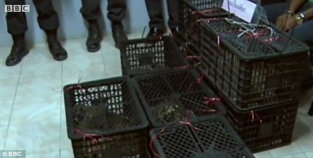 Caged: The tiger cubs were found in the back of a pick-up truck. Police believe they were destined to be smuggled out of the country