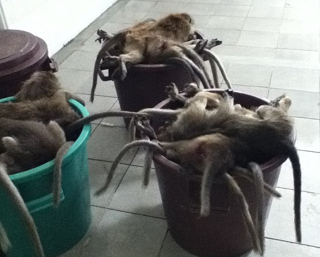 Shocking: Animal rights activists have published pictures of hundreds of monkeys they claim were killed because they were too big for testing in British laboratories