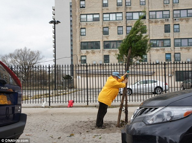 Community helpers: An elderly woman on Surf Avenue in Coney Island tries to right an uprooted tree felled during Hurricane Sandy