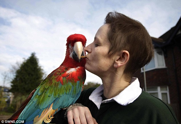 Still an icon: The pensioner parrot has been coming to Rebecca's new shop Beck's Bird Barn in Telford, Shropshire, daily since it opened about two weeks ago and has become something of a local celebrity