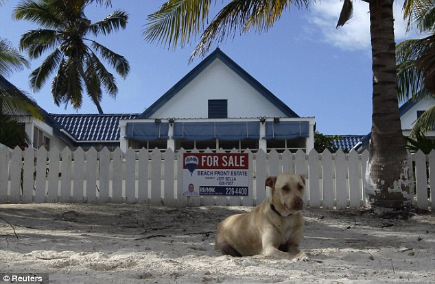 Lonely: A dog is seen outside the home of John McAfee in Belize. McAfee claims the government poisoned several of his dogs