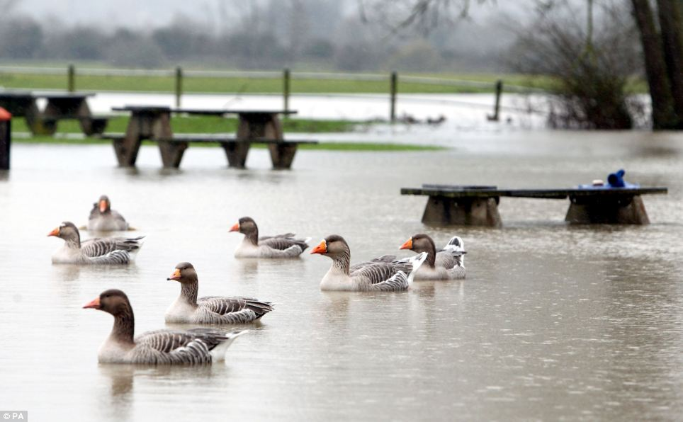 The flooded Port Meadow near Wolvercote, Oxfordshire where the River Thames has burst it banks, as the Environment Agency put out a plethora of flood warnings