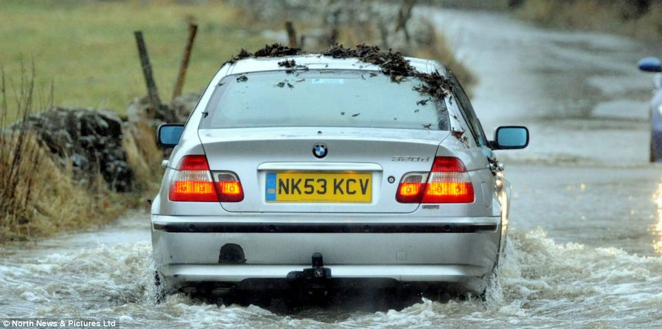 ...so gets revenge by throwing the leaves over the BMW