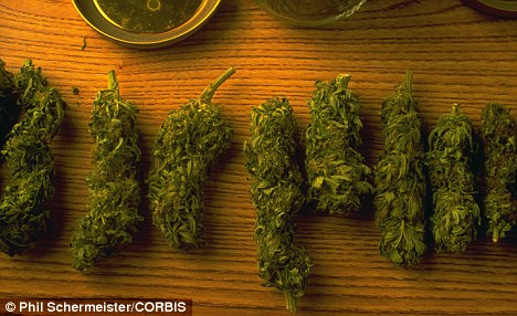 Ground zero: Humboldt County is home to one of the largest pot producing regions in the country