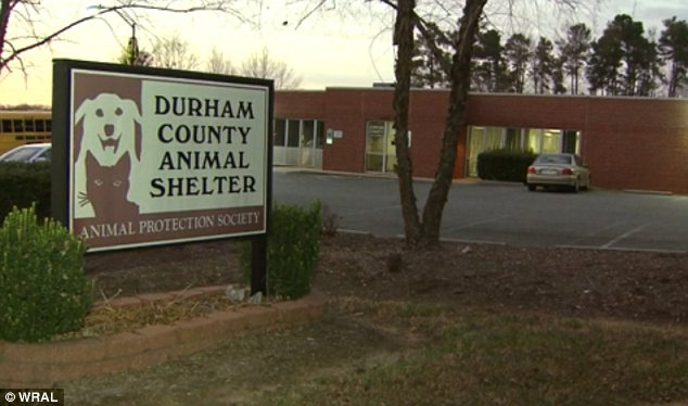 Rescue: The dog was saved by being brought to this animal shelter in North Carolina