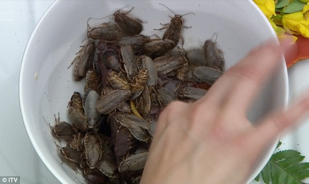 And for dessert: A bowl full of live cockroaches
