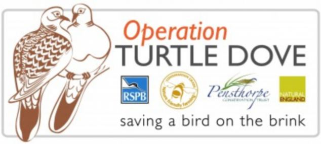 Operation Turtle Dove: The RSPB has launched a three year project to save the turtle dove
