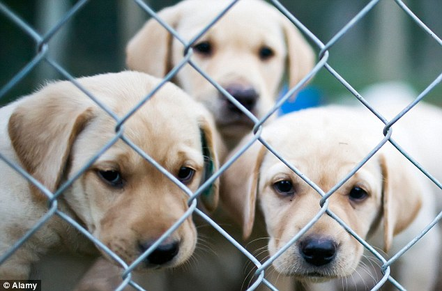 RSPCA: Has one of Britain's oldest and most-cherished charities become a branch office of the London legal profession, and a highly politicised one at that?