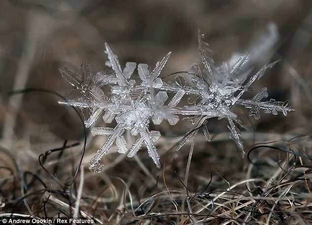 Tiny: Some of the icicles are so small they are barely visible tot he naked eye