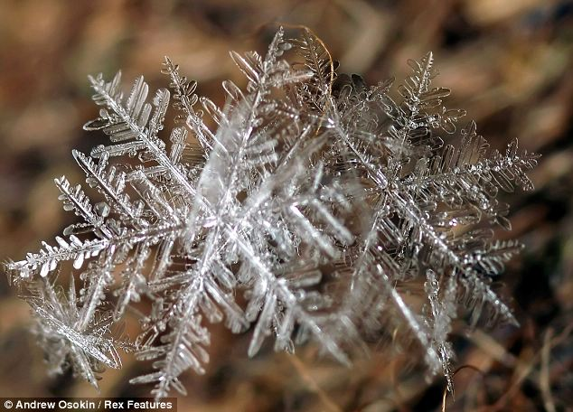 Snowflakes: These snowflakes are stuck together in a helix of ice