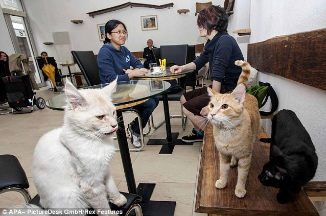 Feline Friends: Both cat and customer feel pampered and loved in a cat cafe