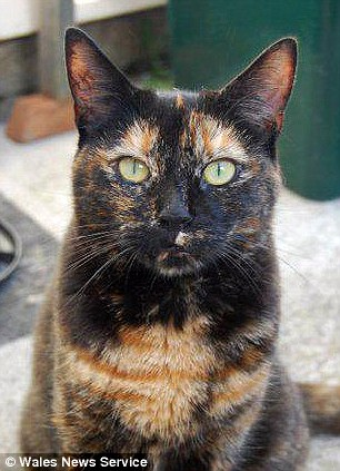 Caring: Fran adopts ill cats and provides them with a comfortable life before they pass away. Pictured is Bella the cat