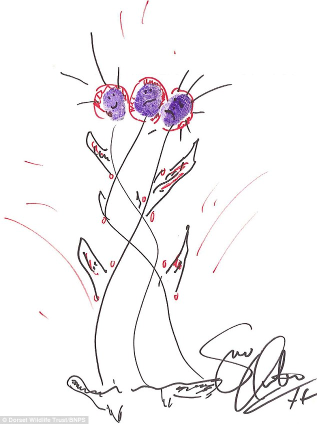 Popular: The top selling drawing so far is singer Suzi Quatro's sketch of flowers, which fetched £245 on the eBay auction