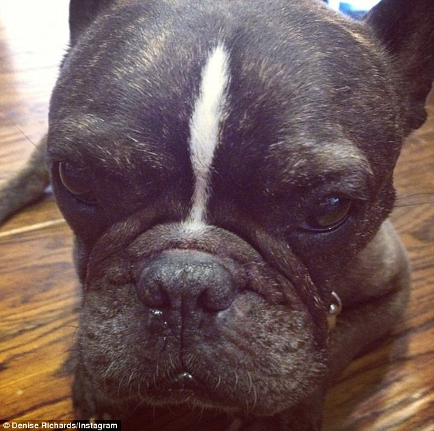 R.I.P Hank: Richards' family is still the mourning the loss of 13-year-old French bulldog Hank