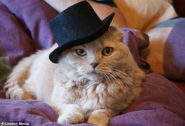 Snooty: This very superior cat only needs a monocle to complete his upper-class look