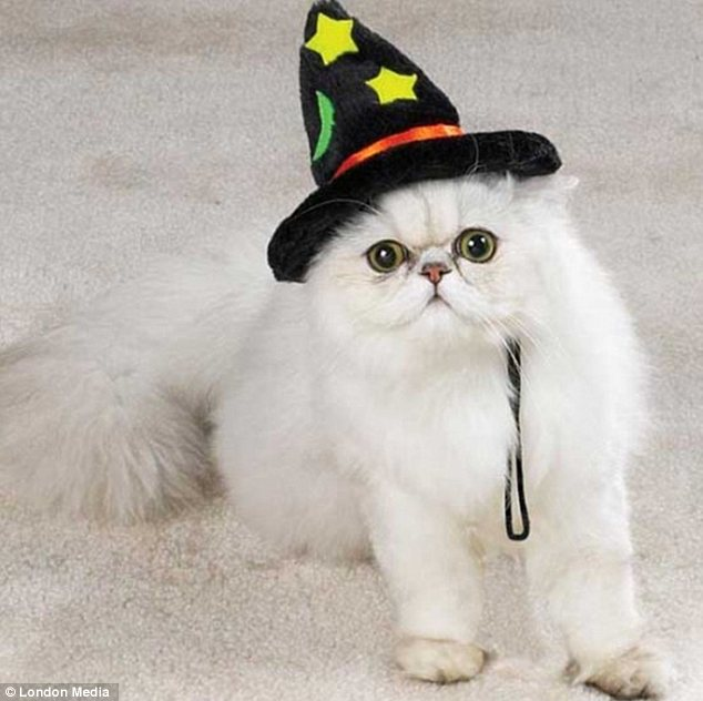 Harry Paw-ter: This privileged cat shows off its special powers with a fluorescent wizard's hat