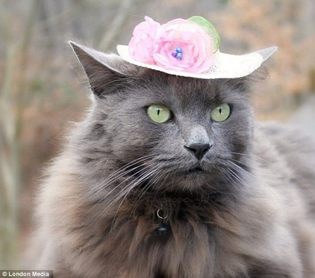 So dignified: This feline could sneak into Ascot or a society wedding with her beautiful hat